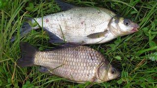 Фидерная рыбалка весной плотва подлещики и карась