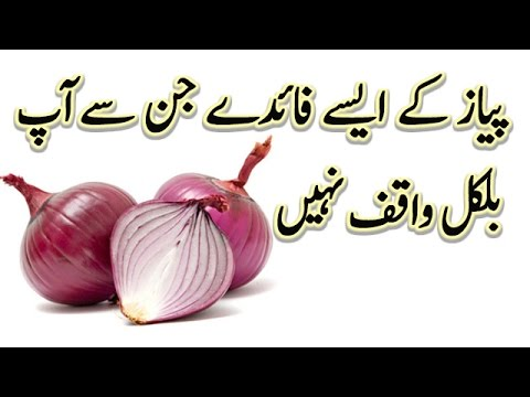 Benefits Of Onion in Urdu || Hindi || Piyaz ke Hairat Angaiz fwaid