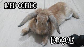 Meu Coelho - Duque