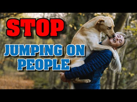Dog Training Videos Stop A Dog From Jumping 0n People
