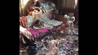 Волонтеры забрали собак у пенсионерки, которая морила животных голодом