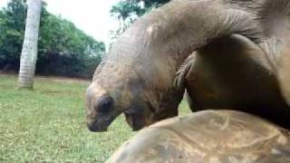 Repeat youtube video 15 Tortues XXX.mp4