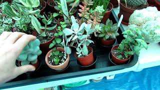 Storm Eleanor and plants damaged in our Polytunnel - VLOG