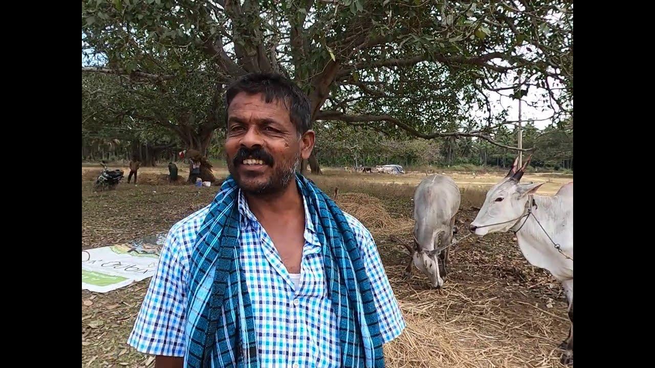 Billur cross farmers in Pura Jatre
