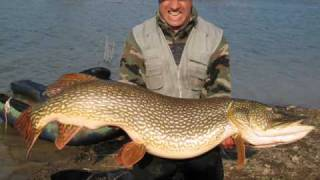 vuclip Italian Big Pike  24 Kg