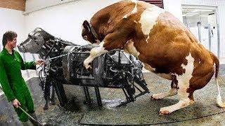 HER BİR MAKİNE SÜPER GELİŞMİŞ ... !! Yurtdışı Sığır Çiftçilerinin Kullandığı Çılgın Teknoloji