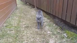 Кот по имени космос ругает хозяйку