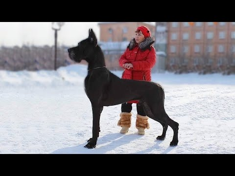 Top 10 Most Unique Dog Breeds