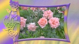 Мои садовые цветы