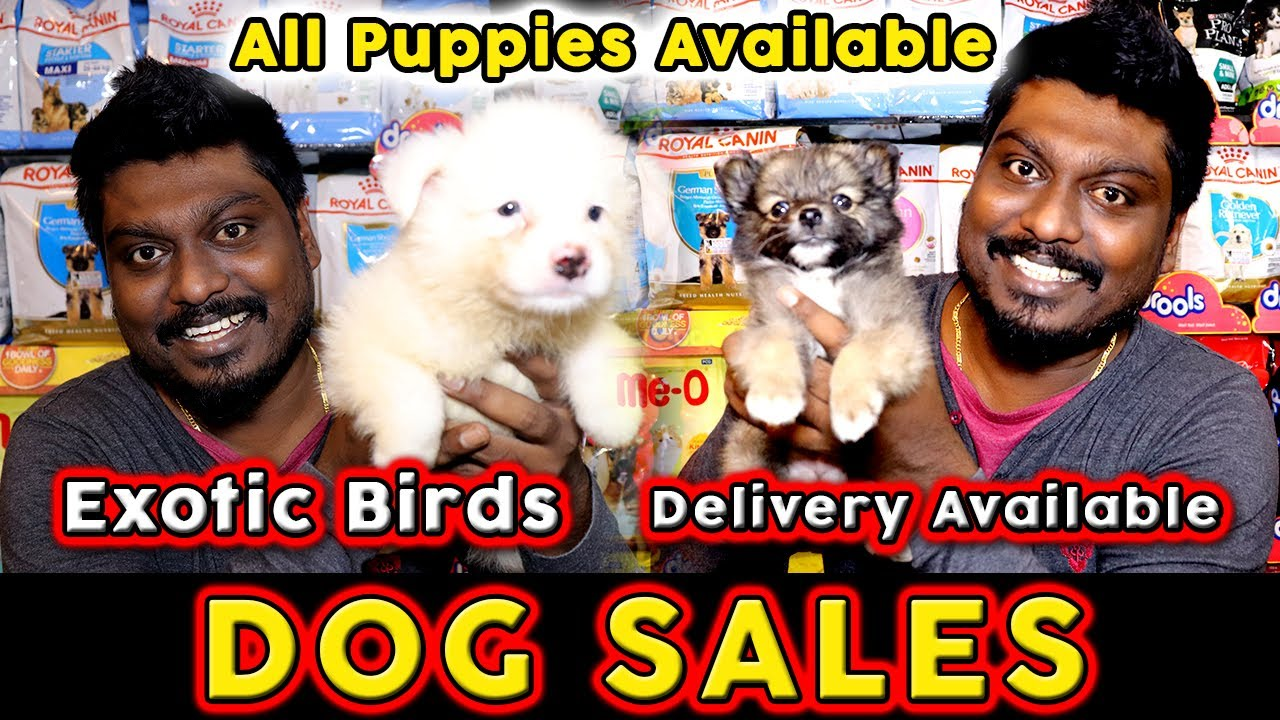 Dogs for Sales | All Puppies Available | Cash on Delivery | Pet Shop in Chennai | Video Shop