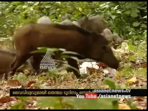 Thenmala Ecotourism | വൈവിധ്യമായി തെന്മല എക്കോ ടൂറിസം