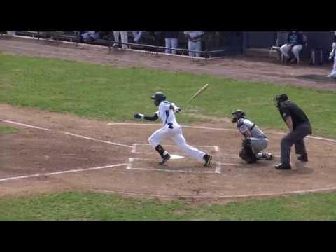 20 Years Of Bluefish Baseball