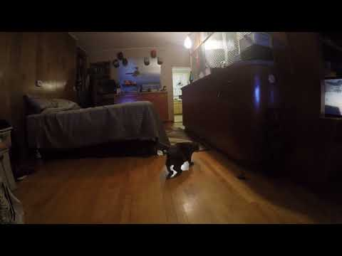 Huge Cat Jumps Nearly Taking Out Camera As Kitty Annoys Her