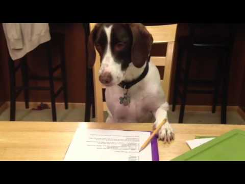 Dog doing homework