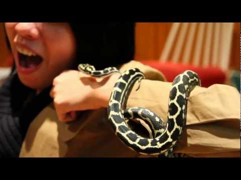 Sister's Pet Snakes – carpet Python baby video Sydney Australia cute ^__^