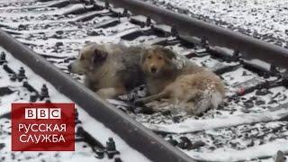 """Украинские """"собаки на рельсах"""" вернулись домой"""