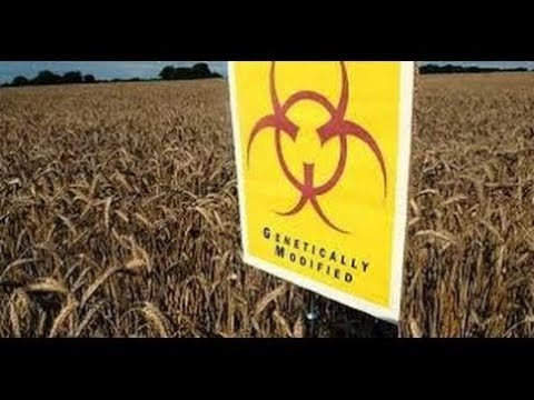 GMO, Seeds of Destruction - Lecture by F  William Engdahl