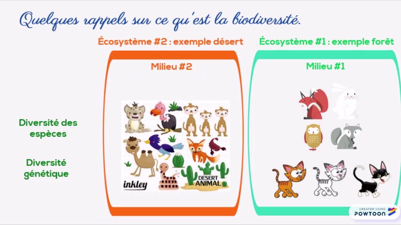 Première Sciences Classe Inversée Ecosystème Youtube