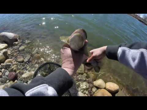 Trout Fishing Bow River, Calgary Alberta April 7 - 10
