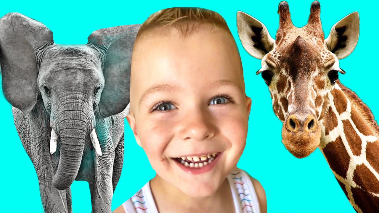 Zoo Animals for Kids with Masik Toys