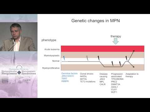 Why MPN transforms to AML