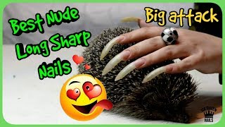 NEW INTENSE ASMR VIDEO! INCREDIBLE LONG SHARP  NAILS PLAY WITH HEDGEHOG! (second part)