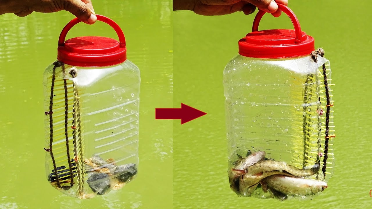 How to make a perfect fish trap diy very easy 2365 on for Diy fish trap