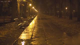 Quiet Night in the Park with Relaxing Sounds of Rain Falling Down the Empty Alleys, Puddles & Leaves