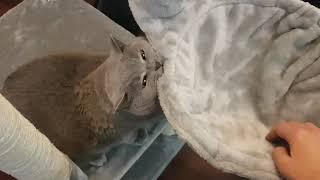 Домик для британского кота. Распаковали и собрали)😻