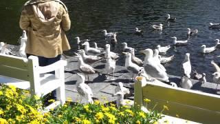 Möwen - keine Tauben - füttern in Stavanger :-)