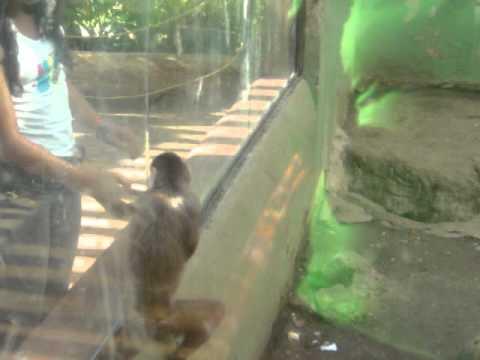 Cali, Colombia Zoo.MPG
