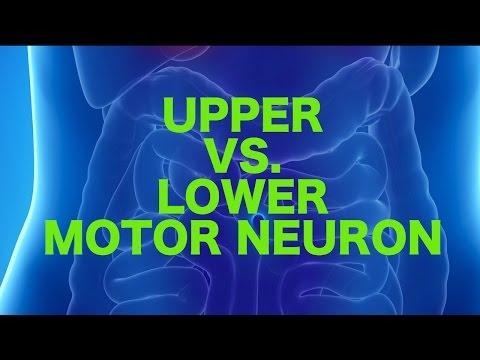 Upper vs. Lower Motor Neuron Lesions || USMLE