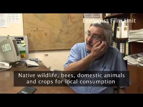 Killing Felds - the True Cost of GMO Food