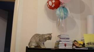 Котик и воздушные шарики