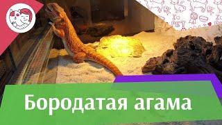 видео Как выбрать здоровую рептилию