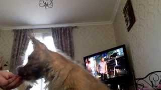 17 Week Old Cairn Terrier