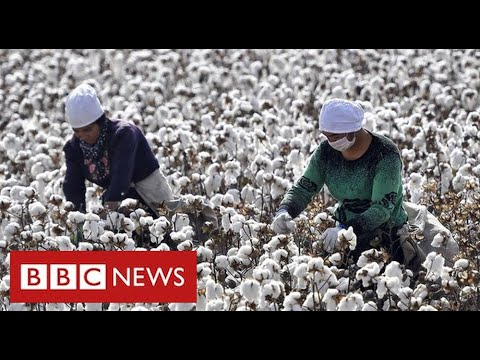 Nike and H&M face China backlash after warning of Uighur forced labour in cotton industry - BBC News