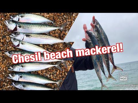 Chesil Beach Mackerel!June 2020