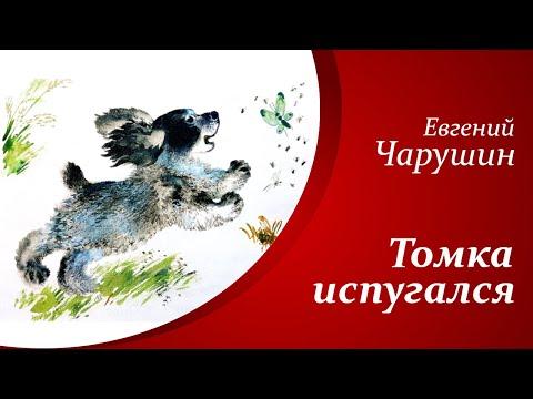 Рассказы о животных для детей     Е.И. Чарушин - Томка испугался🐶