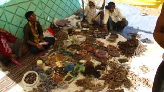 Medicinal Plants of Chhattisgarh (Immune Boosters): Pankaj Oudhia