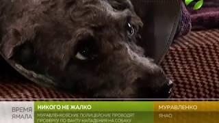 Расстреляли собаку. Ещё один случай живодёрства в Муравленко