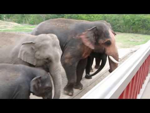 Naypyitaw Zoological Garden & Safari Park, Myanmar in June 2014, Pt 1