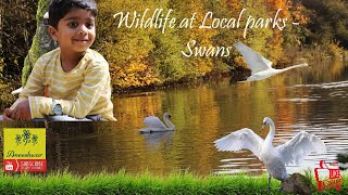 The Life of Swans | Educational Video for Kids wit Aneeshwar| YouTube kids