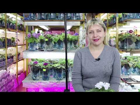 Домашний Цветочный Бизнес . Выращивание Фиалок, Фишки, Лайфхаки !