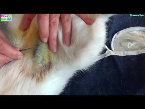 Как снять швы у кошки после стерилизации самостоятельно видео