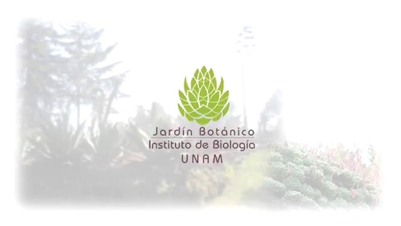 Programaci n febrero y marzo 2016 del jard n bot nico del for Programacion jardin botanico