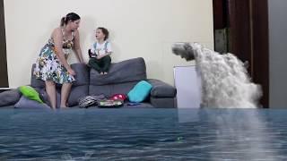 Dany e Cadu em perigo? apareceu um tubarão
