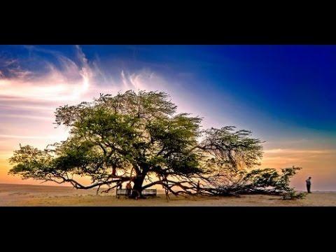 (EOK) ต้นไม้ไม่มงคล   ที่ไม่ควรปลูกในบ้าน