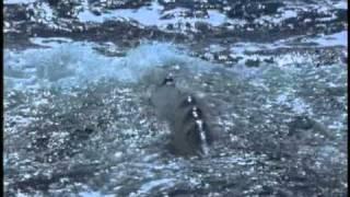 Odc 1 Wieloryb gigant oceanów 2 1