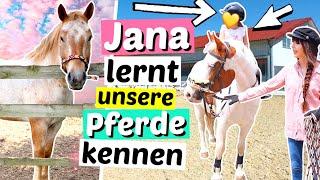6-jährige NICHTE reitet zum 1.Mal & lernt unsere Pferde kennen 😱 | ViktoriaSarina